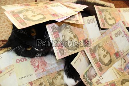 cat covered with ukrainian money