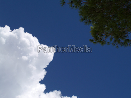 white clouds and pine trees against