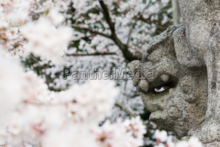 japanese lion dog face and cherry