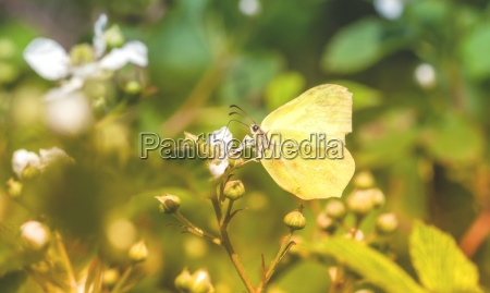yellow butterfly from the side on