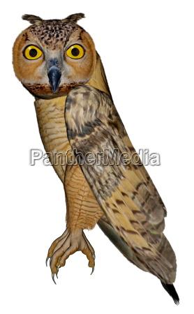 eagle owl 3d render