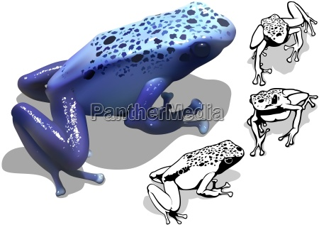 blue poison dart frog set