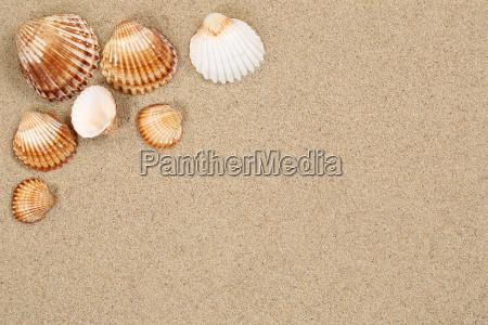 beach sand scene summer vacation with