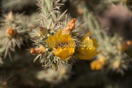 lost dutchman state park arizona united