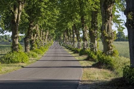 allee in uckermark east germany