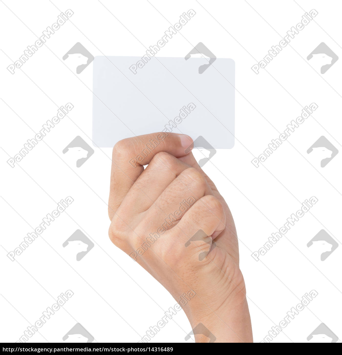 hand, hold, blank, white, card, isolated - 14316489