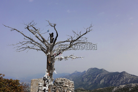 tree on the castle sankt hilarion