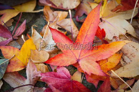 colors of autumn leaves of the
