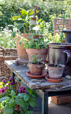 flower pots plants terrace green leaves