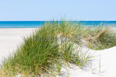 dune sand with dune grass and