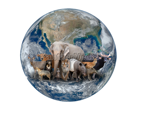 group of asia animal with planet