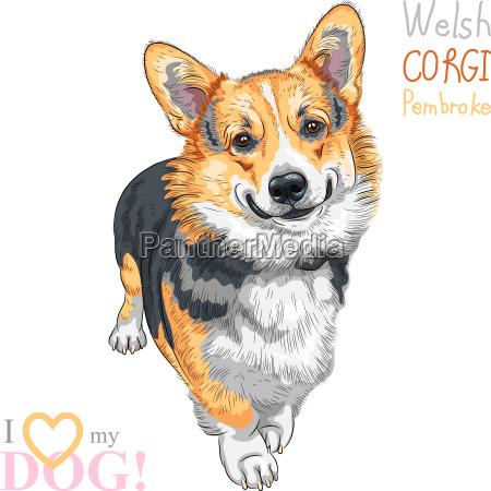 vector sketch dog pembroke welsh corgi