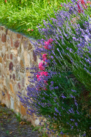 lavender and roses on natural stone