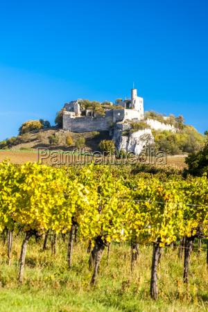 ruins of falkenstein castle with vineyard
