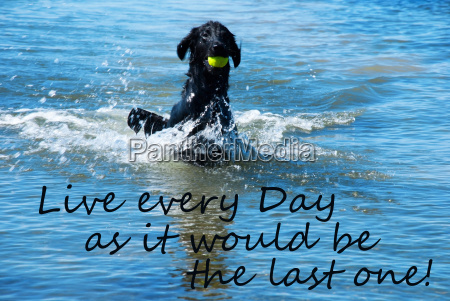 dog play with ball in water
