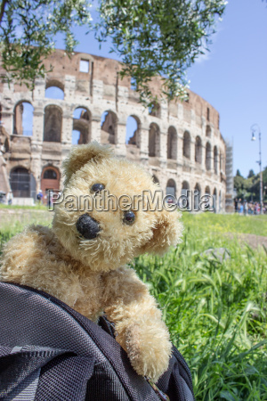 teddy before colosseum in rome