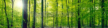 luz folha ambiente arvore parque madeira