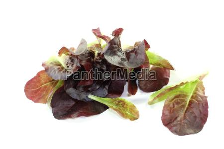 fresh crunchy red salad