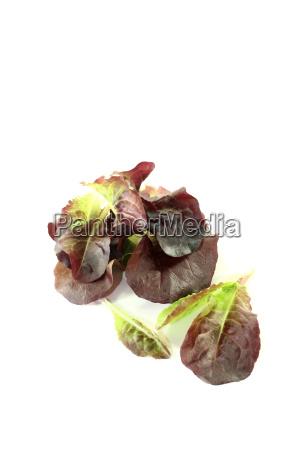 delicious red salad