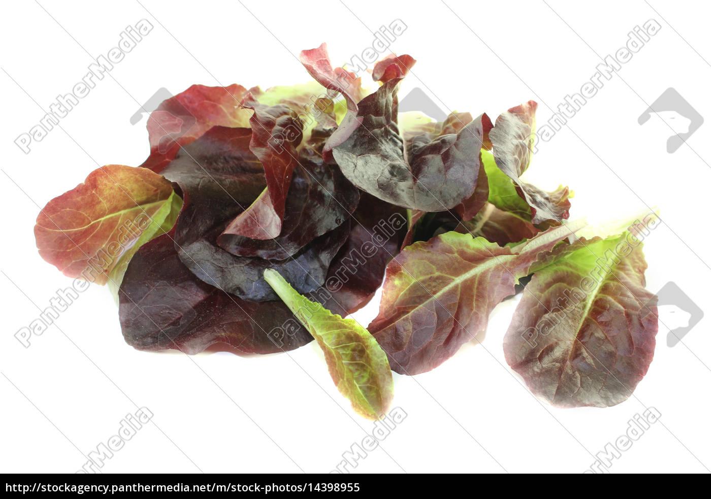 fresh, red, salad - 14398955
