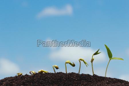 seed row growing on soil