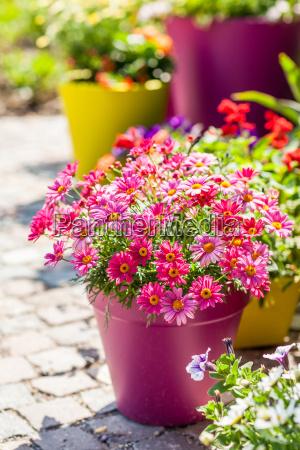 potenciometros de flor