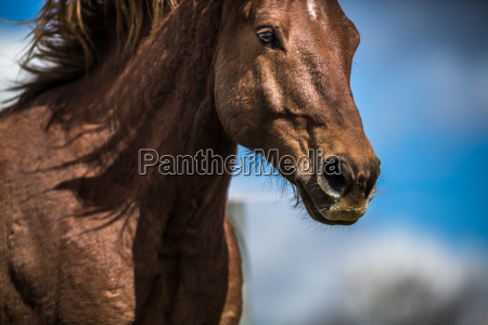 lovely horse head close up