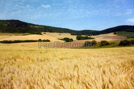 landscape at jena