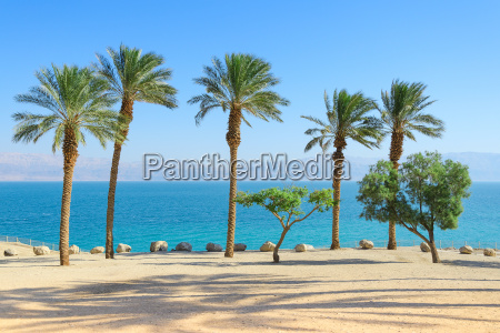 scenery of dead sea with palm