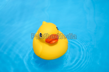 yellow squeaky duck in the paddling