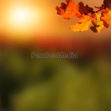 wooden table with autumn background