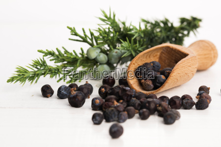 juniper plant with berries