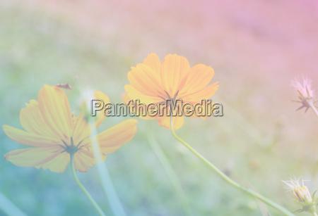 flower sweet color