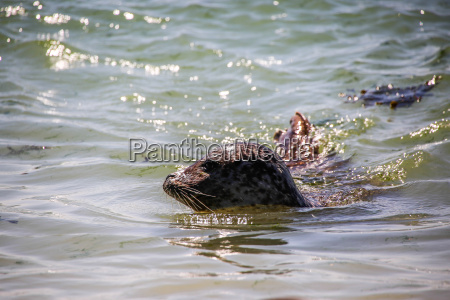floating cone seal in the north
