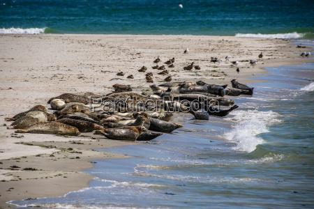 cone seals on a north sea