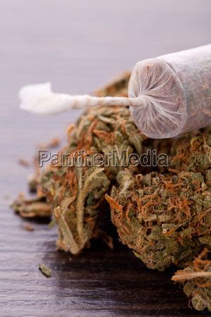 dried cannabis flowers grass with joint