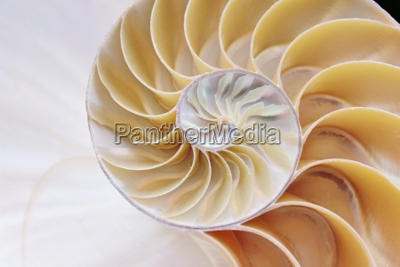 nautilus shell cross section swirl symmetry