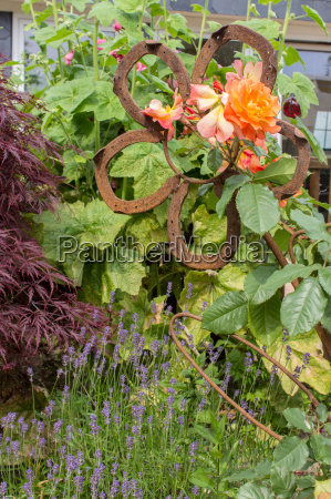 flower garden with orange roses and