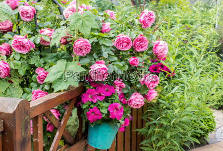 flower garden with pink roses and
