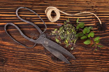 aromatic culinary herbs fresh and dried