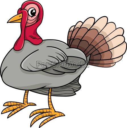 turkey bird farm animal cartoon