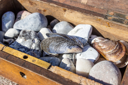 wooden box with stones shells in
