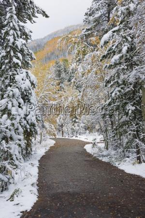 a path road through the pine