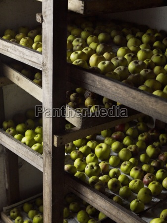 green apples arranged in rows for