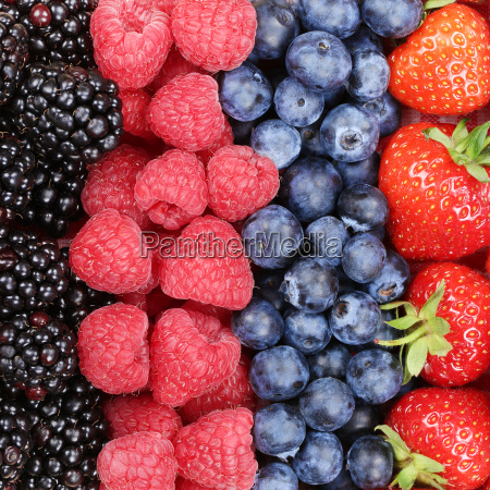 berry fruits in a row with