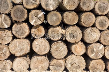 aufgeshichtet logs