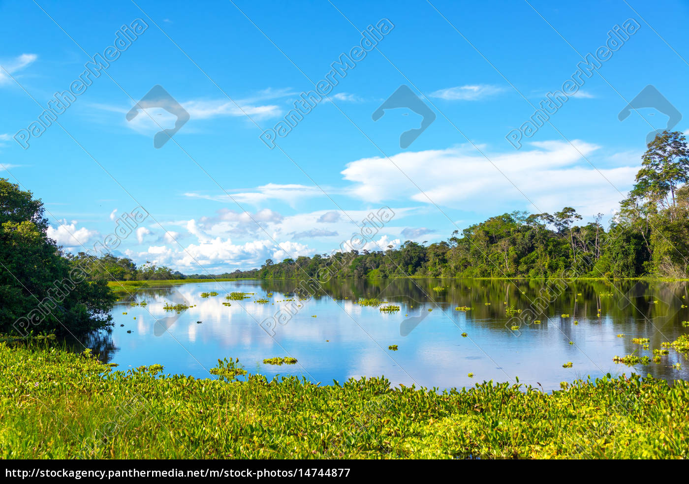 Amazon Jungle View And Reflection Royalty Free Image 14744877