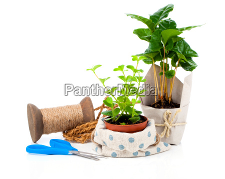 young plants in the packaging for