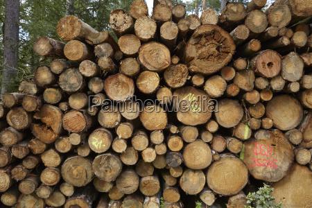 luneburg heath pile of tree