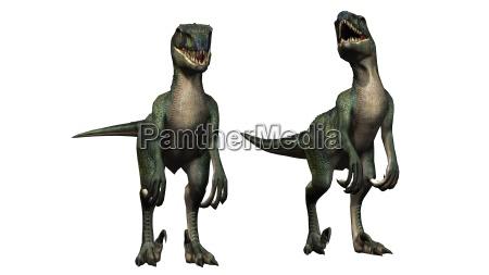 velociraptor dinosaur isolated on white